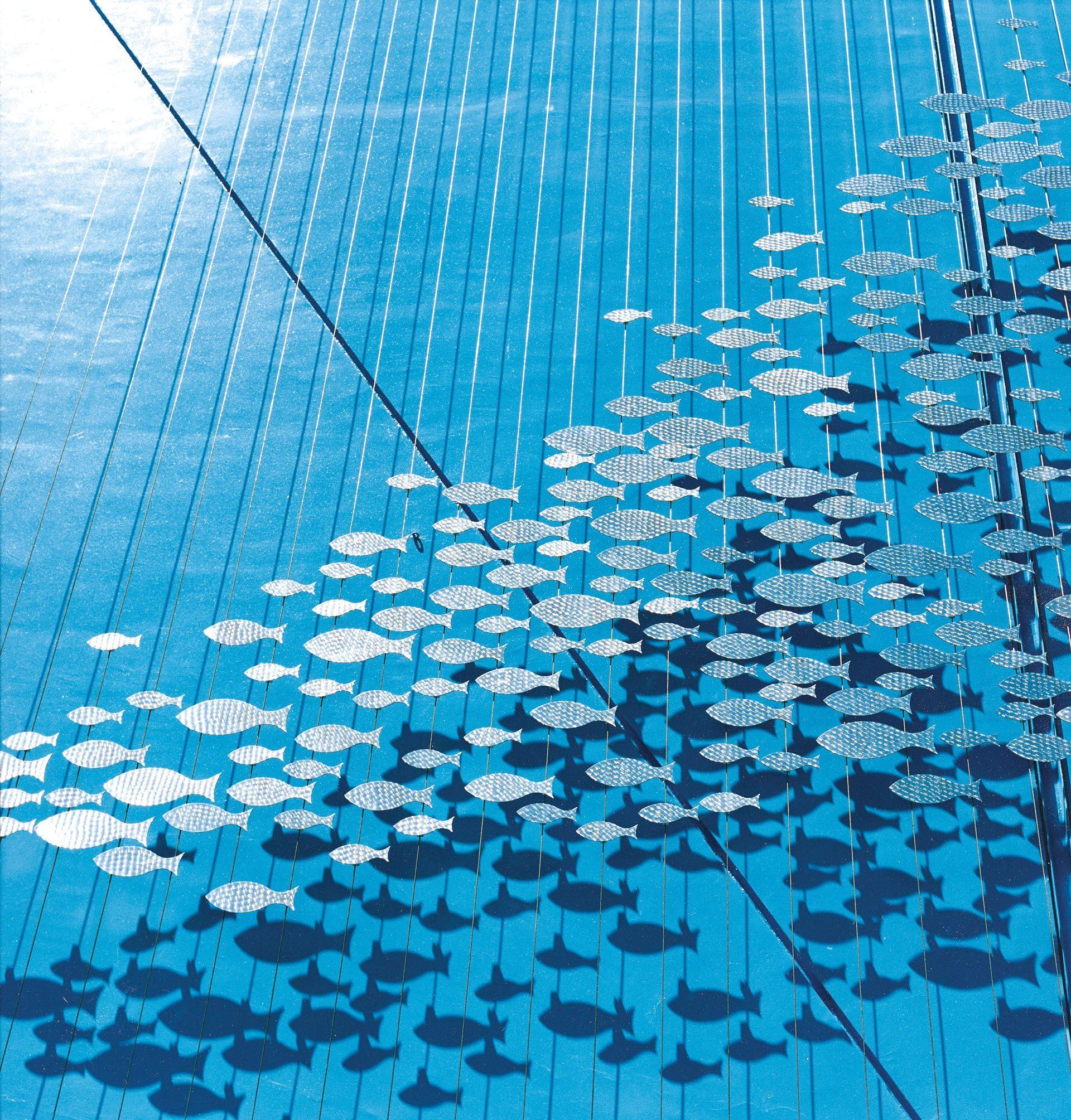 pesci acquario di genova